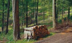 2-timber-countryside-management